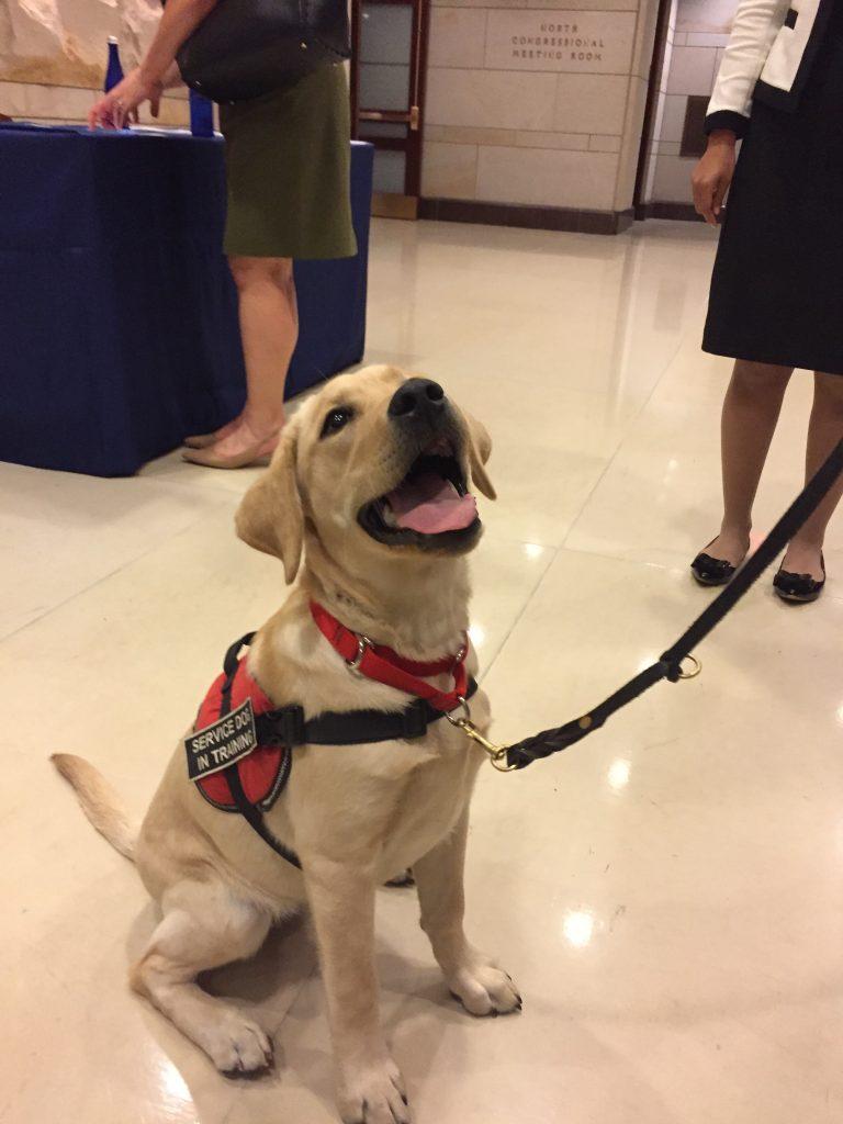 advocacydog3